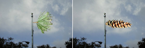 Pine Flag